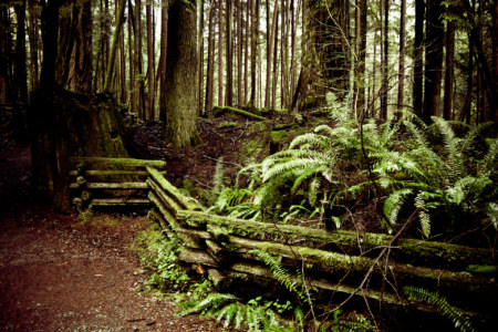 Capilano Canyon Trails