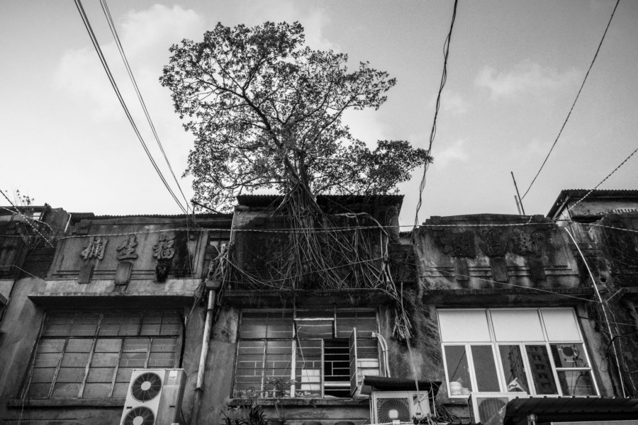 A tree grows from an old building in the fruit market