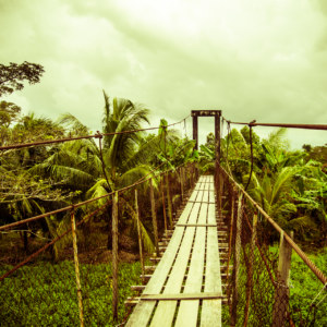 A bridge in the tropics