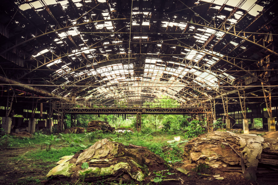 A forest growing out of an old woodworking factory in Checheng