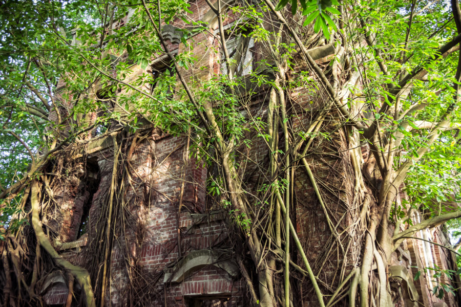 A forest grows out of the Minxiong ghost house 民雄鬼屋