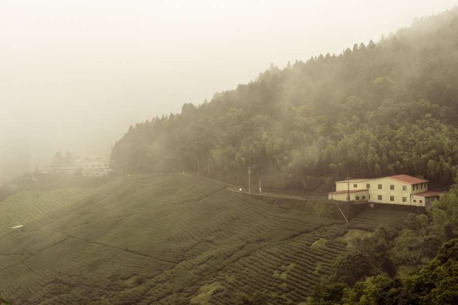 Tea plantations on the mountains of Nantou