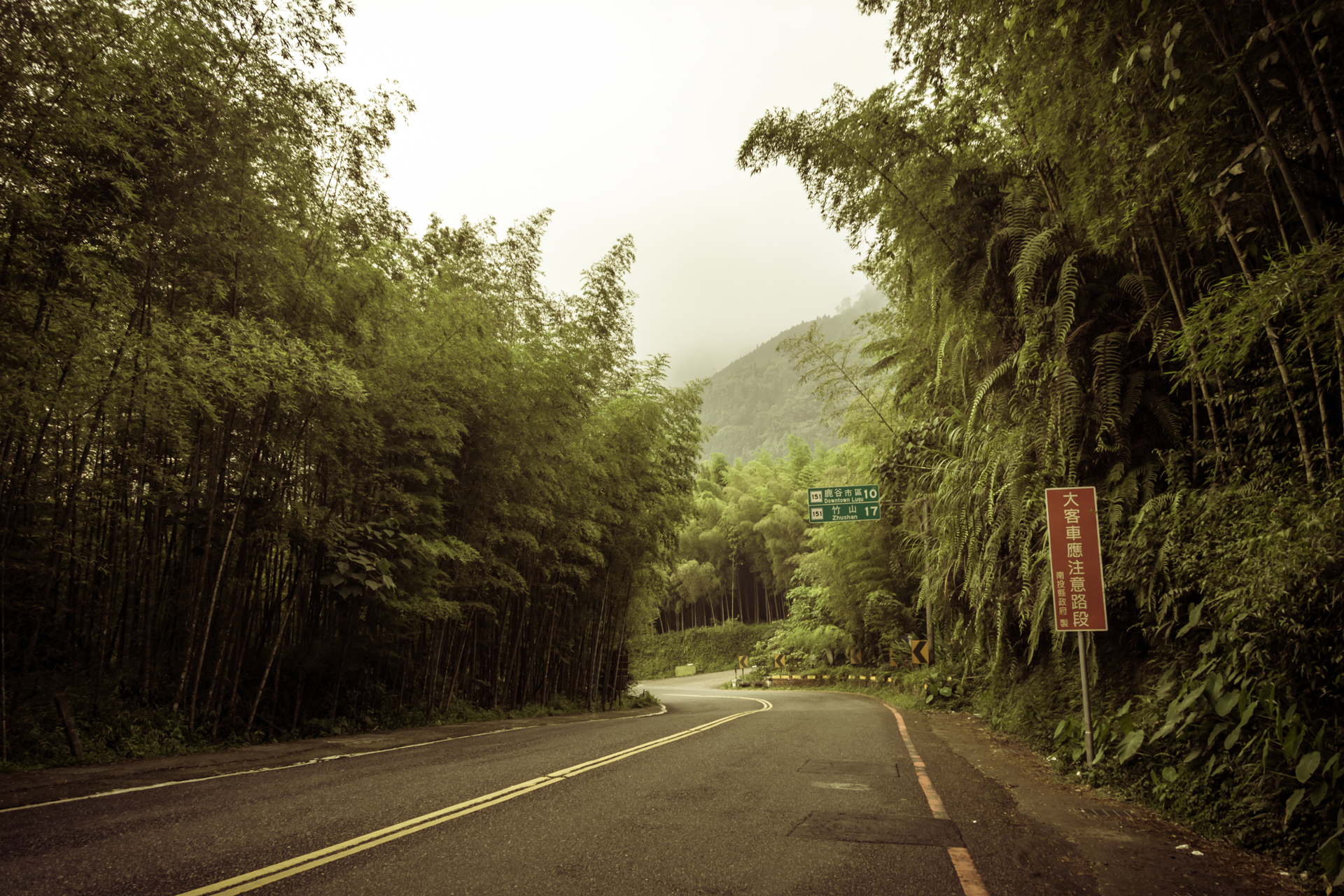Descending through the bamboo forest of Lugu