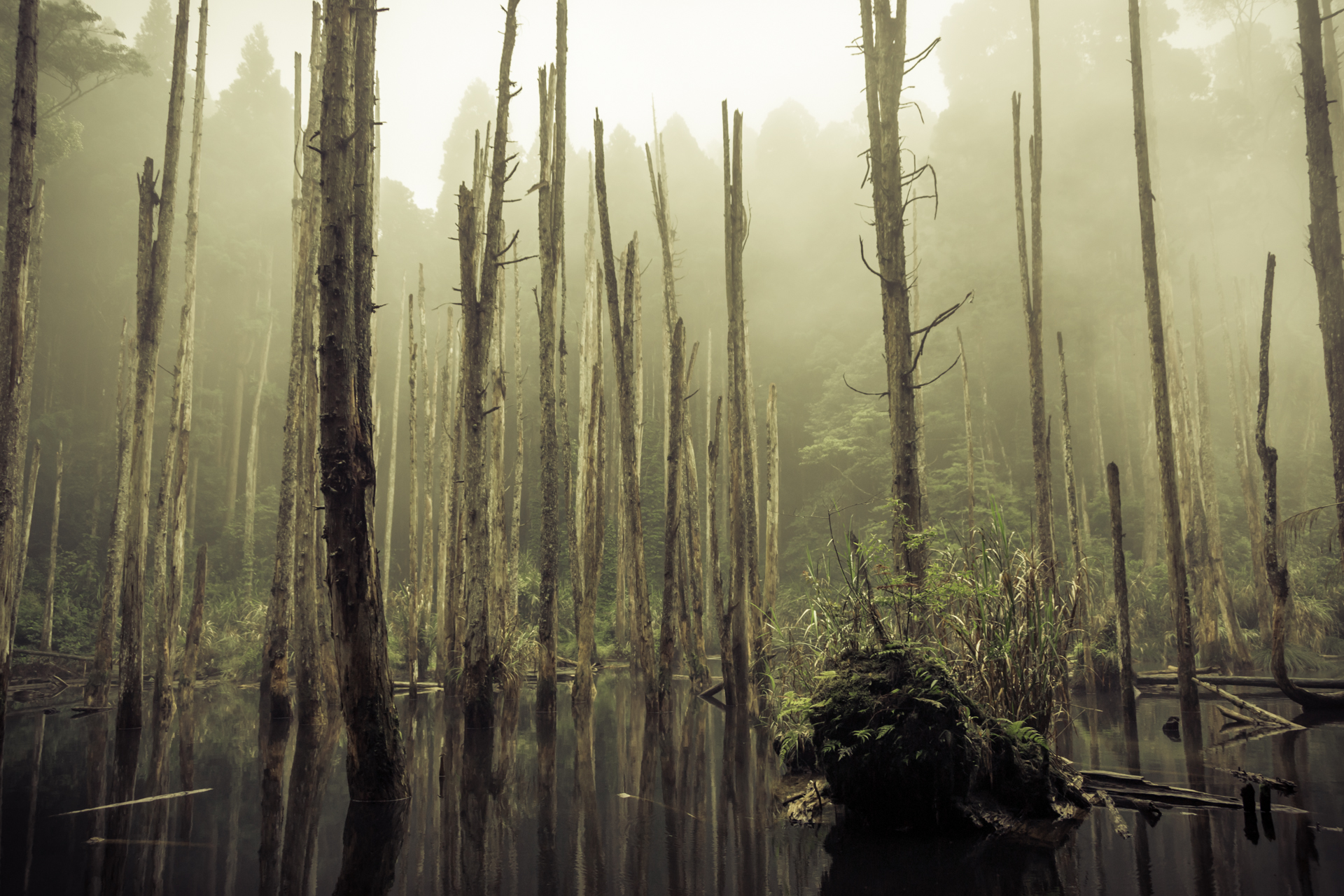 Misty bog in the mountains of Nantou