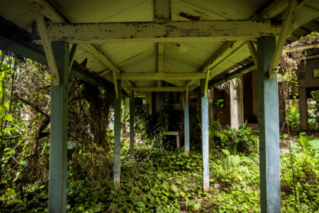 Overgrown Pathway Within the Puli Sanatorium 埔里肺病療養