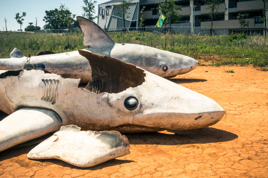 A shark cemetery in Taichung