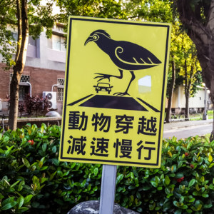 Watch out for giant birds