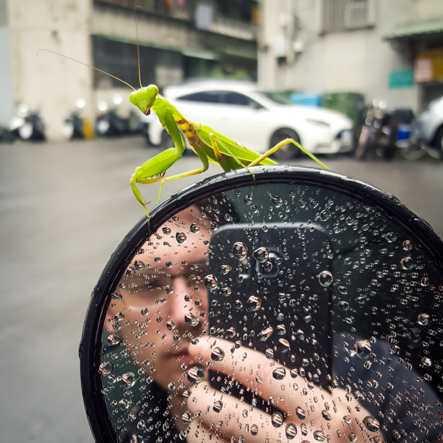 Mantis on a mirror