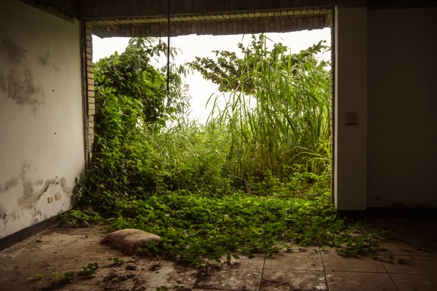 An overgrown window at Jiamuzi Bay Bed & Breakfast 加母子灣