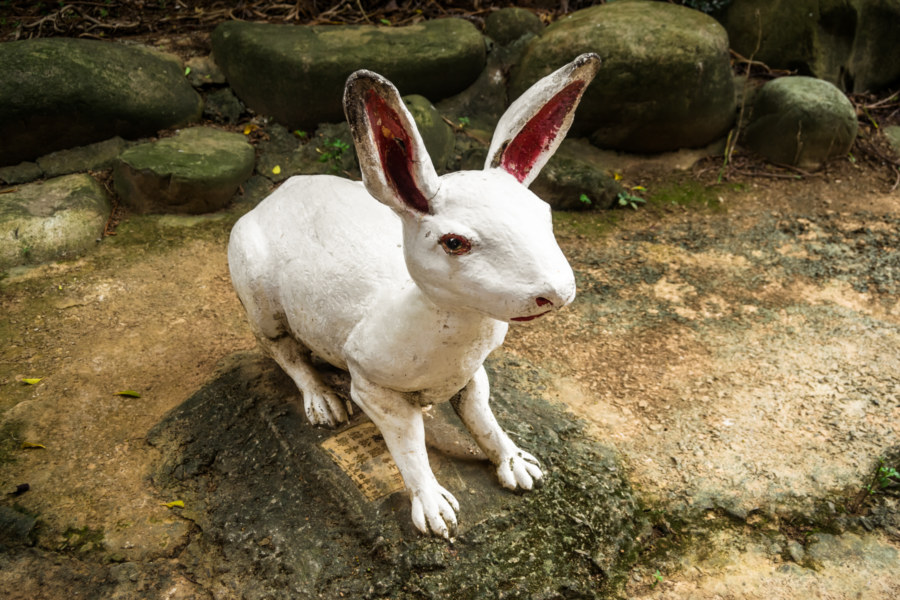 Acid rabbit in rural Taoyuan