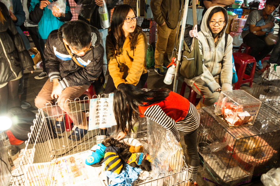Animal rescue at Douliu Renwen Park Night Market