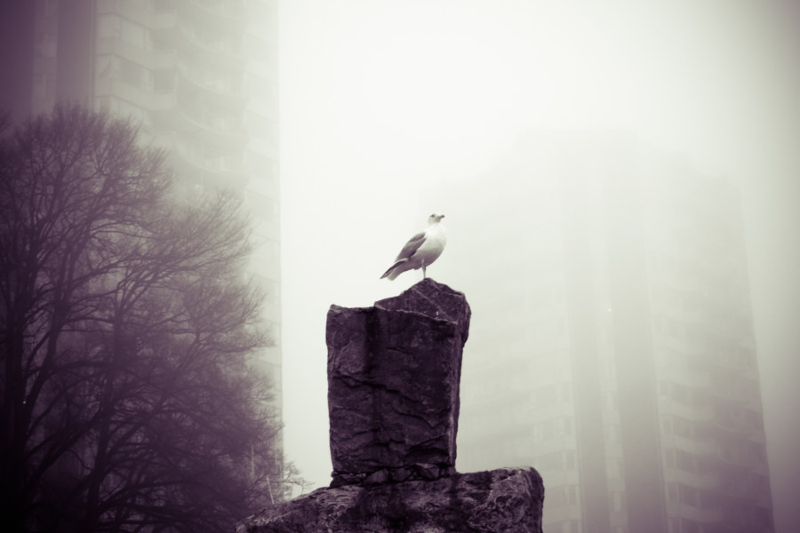 Gull In The Fog